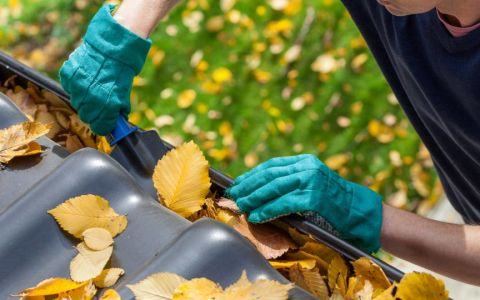5 ways to get your garden ready for autumn
